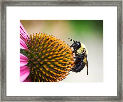 Seeking Nectar Framed Print