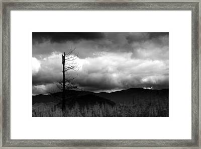 Seeking New Horizons Framed Print by Holly Kempe