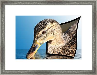 Seeking Water Framed Print by Shane Bechler