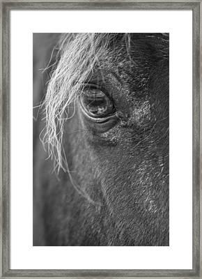 Seen Thru The Eye Framed Print by Karol Livote