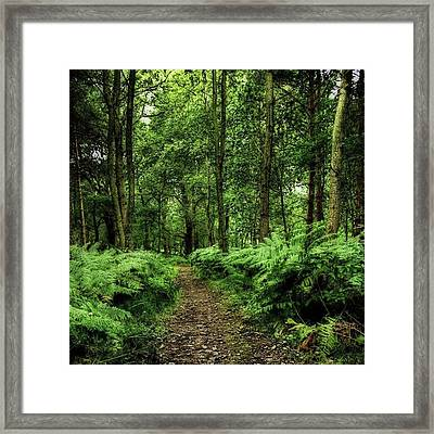 Seeswood, Nuneaton Framed Print