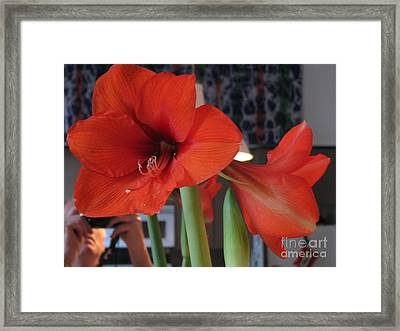 Framed Print featuring the photograph Self Portrait With Amaryllis by Erik Falkensteen