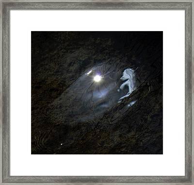 Self Reflection Framed Print