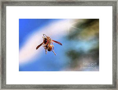 Self Reflection Framed Print by Sharon McConnell