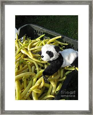 Framed Print featuring the photograph Selling Beans by Ausra Huntington nee Paulauskaite