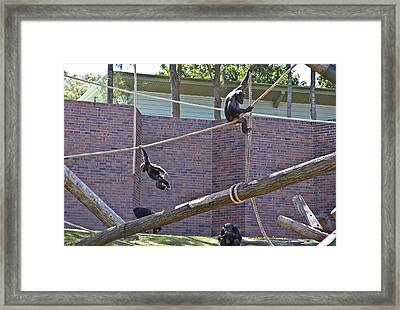 Framed Print featuring the photograph Sembe Got Away  by Miroslava Jurcik
