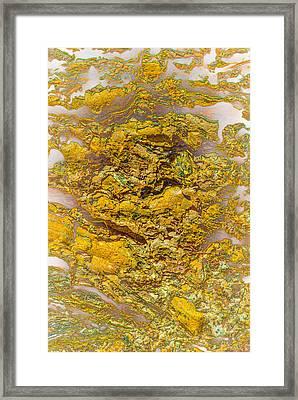 Semi Translucent Bark Abstract Framed Print