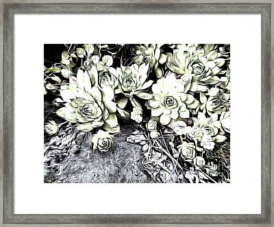Framed Print featuring the photograph Sempervivum - Ebony And Ivory  by Janine Riley