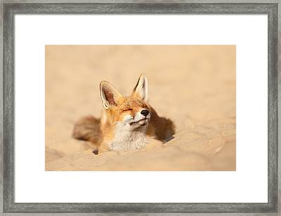 Zen Fox Series - Sandy Paws Framed Print by Roeselien Raimond
