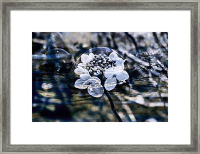 Send You Some Feeling Of Blue Framed Print by Nicole Frischlich