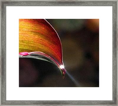 Sending A Ray Of Sunshine Framed Print by Angela Davies
