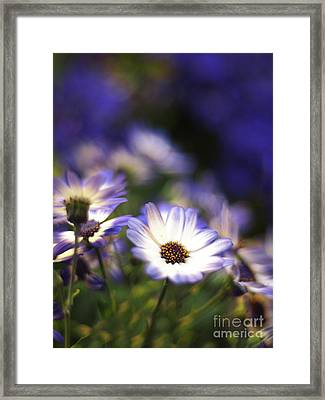 Senetti Dreams Framed Print by Dorothy Lee