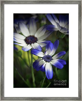 Senetti On A Warm Spring Day 2 Framed Print by Dorothy Lee