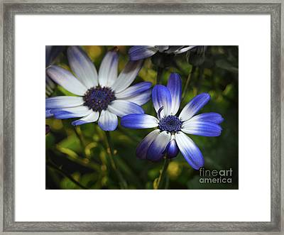 Senetti On A Warm Spring Day Framed Print by Dorothy Lee