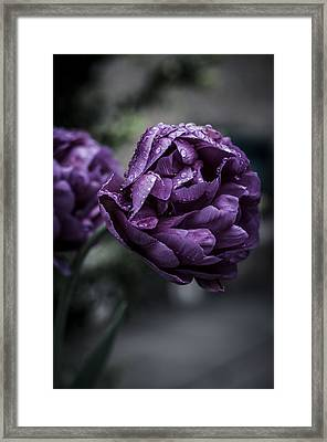 Sensational Dreams Framed Print by Miguel Winterpacht