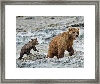 Framed Print featuring the photograph Sensing Danger by Cheryl Strahl