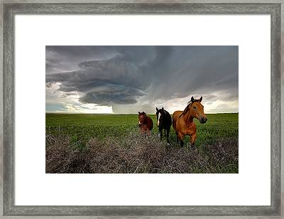 Sensing The Storm #3 Framed Print