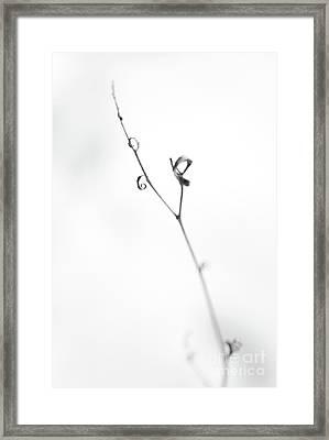 Sensitive Framed Print by Gabriela Insuratelu