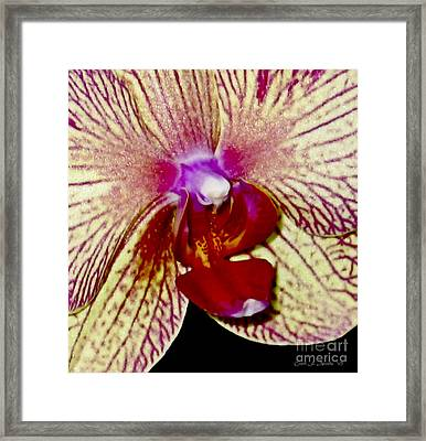 Sensual Orchid Up Close And Personal Framed Print by Carol F Austin