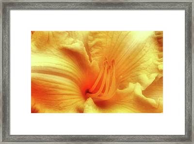 Sensuous Lily Framed Print by Kristin Elmquist