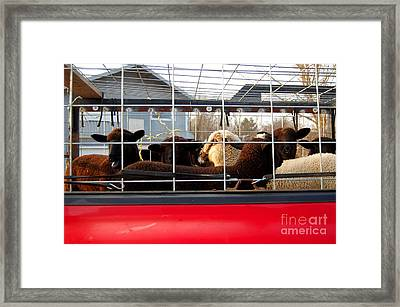Sent To The Pen For Disorderly Conduct Framed Print by The Stone Age