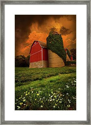 Sentient Framed Print by Phil Koch