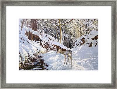 Sentier Des Biches Framed Print by Julian Wheat