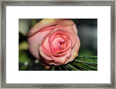 Framed Print featuring the photograph Sentimentality by Diana Mary Sharpton