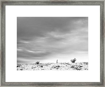 Sentinel Against A Winter Sky Framed Print by Mary Lee Dereske