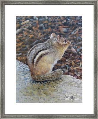 Sentinel Framed Print by Pamela Clements