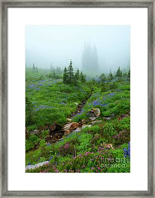 Sentinels In The Mist Framed Print by Mike Dawson