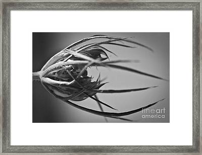 Sepal Structure Framed Print by Ryan Kelly