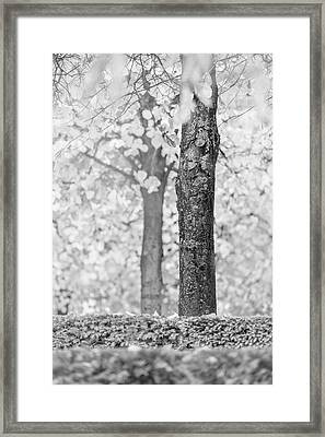 Separate Framed Print