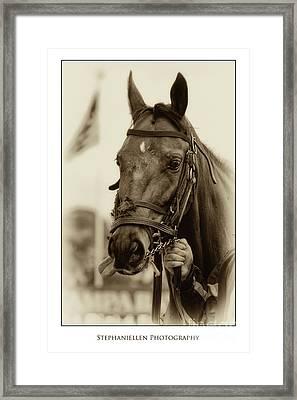 Sephia Racehorse Framed Print by Stephanie Hayes