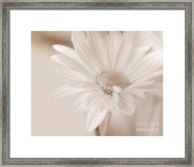 Sepia Daisy Framed Print by Lisa McStamp