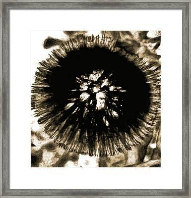 Sepia Dandelion Framed Print
