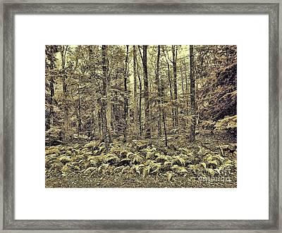 Sepia Landscape Framed Print by Jeff Breiman