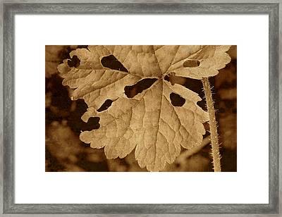 Sepia Leaf Framed Print by Bonnie Bruno