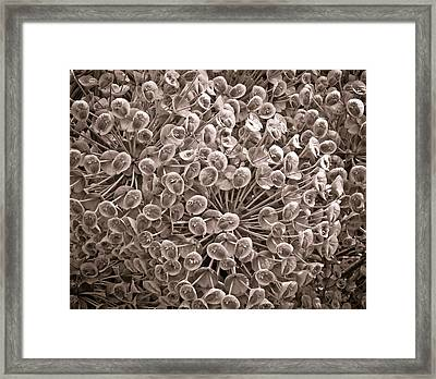 Sepia Nature Pattern Framed Print by Frank Tschakert