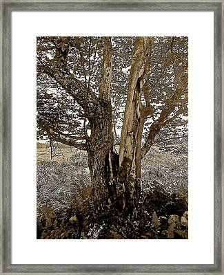 Sepia Series - Cleft Tree Framed Print by Elizabeth Tillar
