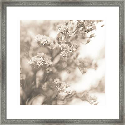 Sepia Solidago 2 Framed Print by Anne Gilbert