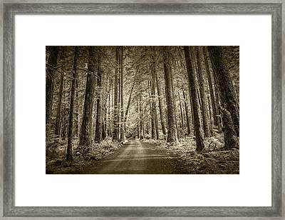Sepia Tone Of A Road In A Rain Forest Framed Print by Randall Nyhof