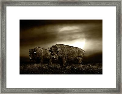 Sepia Tone Of An American Bison Under A Super Moon Framed Print by Randall Nyhof