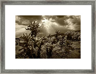 Framed Print featuring the photograph Sepia Tone Of Cholla Cactus Garden Bathed In Sunlight by Randall Nyhof