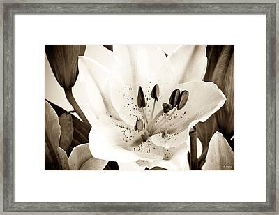 Sepia Toned Asian Lily Framed Print