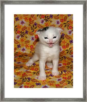 September 2006 Framed Print