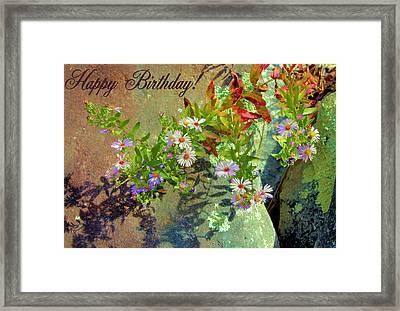 September Birthday Aster Framed Print by Kristin Elmquist