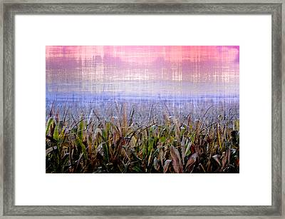 September Cornfield Framed Print by Bill Cannon