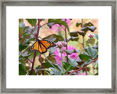September Monarch Framed Print by Janis Nussbaum Senungetuk