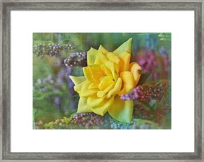 September Rose Framed Print by Kathy Bucari